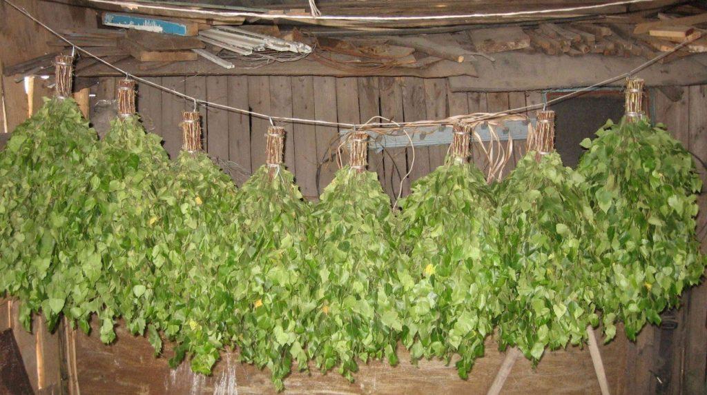 Веники для бани: заготовка, польза и отдых